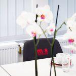 ms-Teststudio Stuttgart
